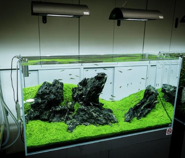 Hạt Giống Trân Châu Ngọc Trai Thủy Sinh Hồ Cá