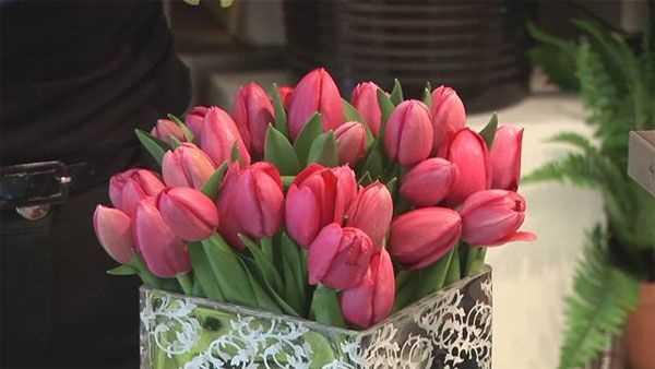 Bộ 04 Củ hoa Tulip Chơi Tết Âm Lịch