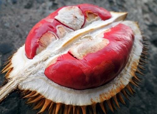 Cây Giống Sầu Riêng Ruột Đỏ