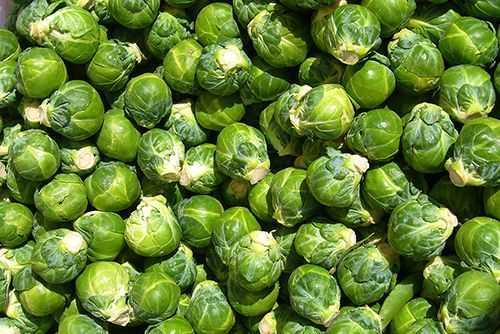 Hạt giống bắp cải mini xanh