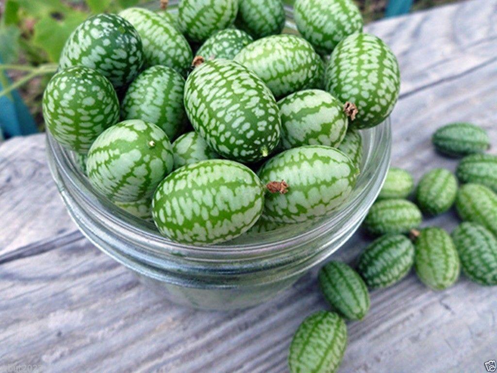 Hạt giống dưa hấu mini ( Dưa Hấu Tí Hon)