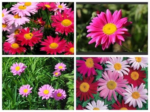 Trọn bộ sản phẩm trồng và chăm sóc hạt giống hoa cúc đuổi muỗi