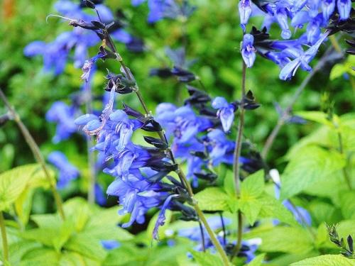 Trọn bộ sản phẩm trồng và chăm sóc hạt giống hoa xác pháo