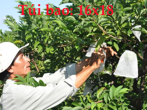 Combo 100 Túi Bao Cam, Bao Xoài, Bao Ổi, Bao Na, Mận Và Các Loại Quả Kích Cỡ Nhỏ ( 16cm x 18cm )